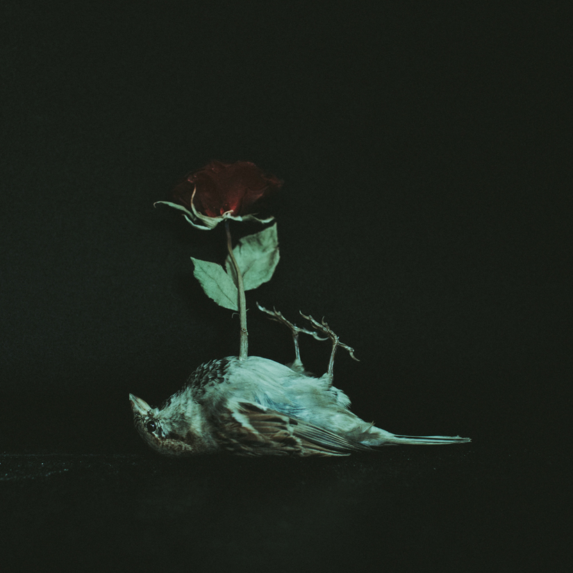 Laura Makabresku • And then he started to blossom • 2015